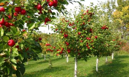 Земеделие – развитие на традиционните селскостопански отрасли